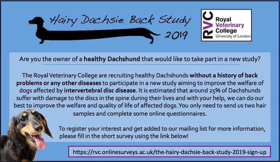 Hairy Dachsie Back Study 2019 - can you help?