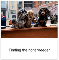 Find_the_right_breeder.png
