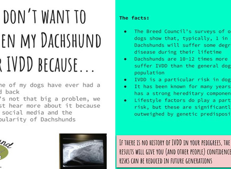 I don't want to screen my Dachshund for IVDD because...