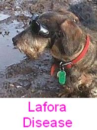 Lafora.png