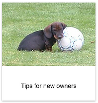 New_owner_tips.png