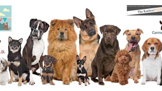The Great British Ex-Breeding Dog Survey 2017