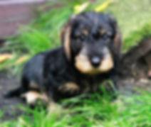 MW Puppy.jpg