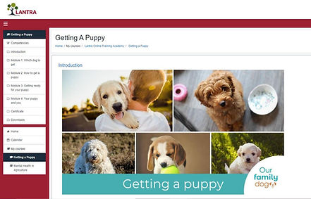 Getting a Puppy e-learning course.jpg