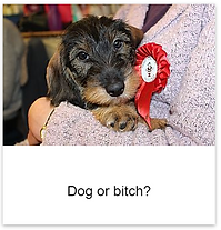 Dog_or_bitch.png