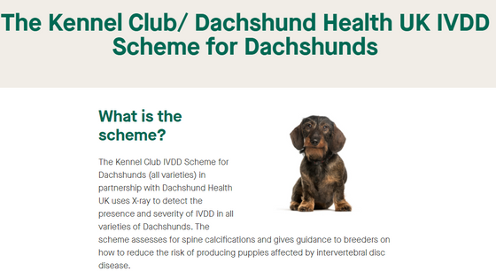 The Kennel Club is now managing our IVDD Screening Programme