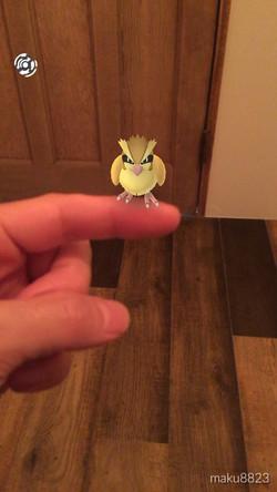pokemon wao