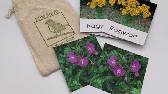 Wild Flower Nature Activity Pack