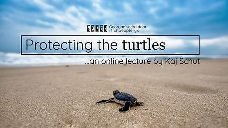 Protecting the turtles3 (1).jpg