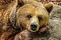 bear-838688_1920.jpg
