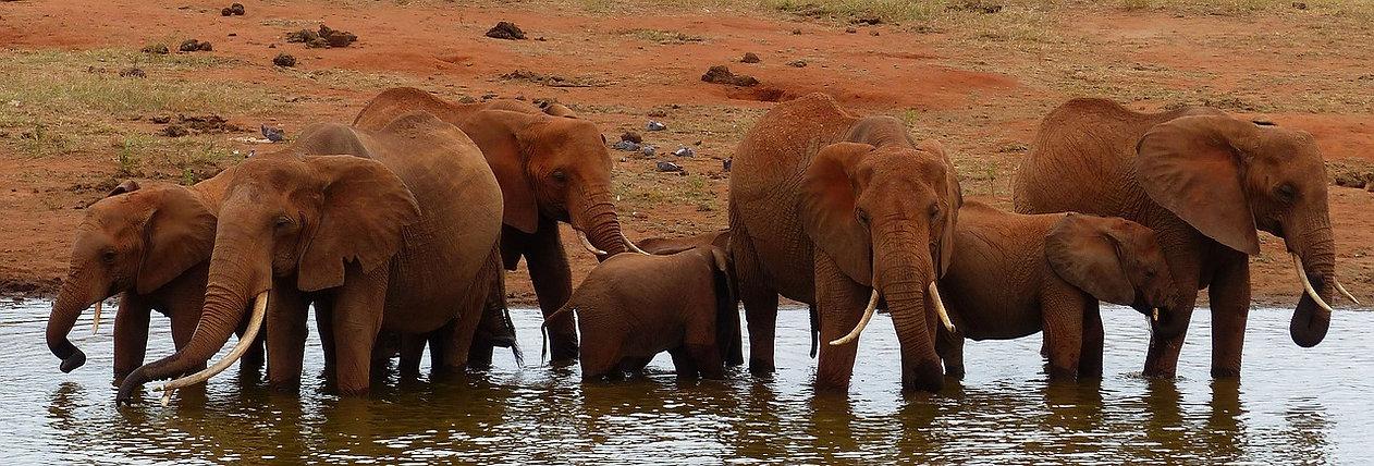 olifant 2.jpg