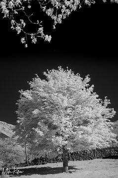 MKPhoto-25-1.jpg