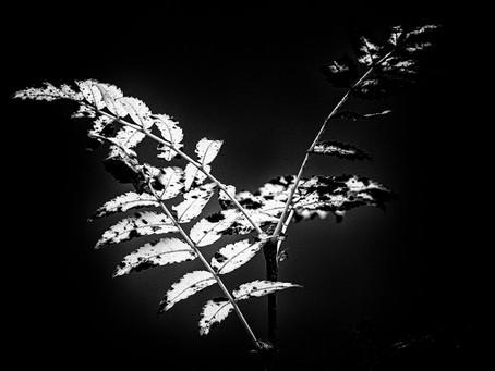 WABI SABI Photography - Celebrating Impermanence through Imagery