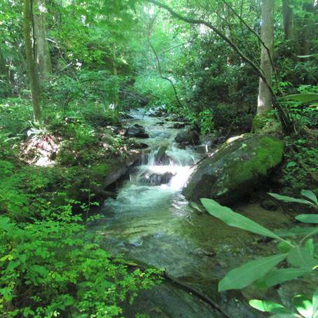 7/8/20 Johnson Branch, new creek #978