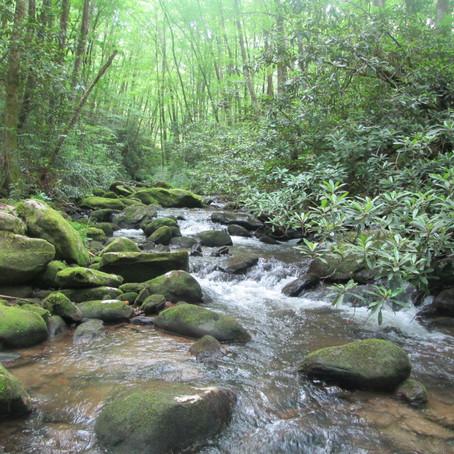 6/17/20 Little Buffalo Creek - new creek #973