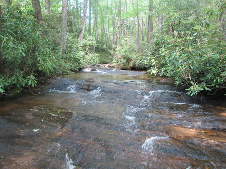 6/3/20 Back to Yancey County for 7 New Creeks!