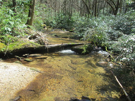 2018-04-11   Headwaters State Forest