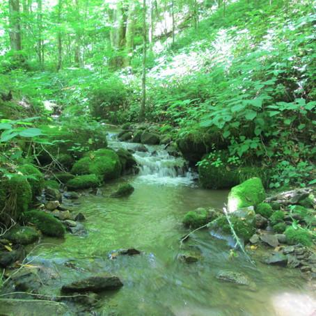 June 26 - More New Creeks!