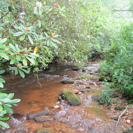 July 21, 2020 - Fork Creek, new creek #981