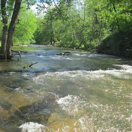 2019-05-05 New Creek #913 - Little River in Alleghany County