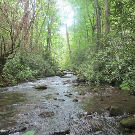 2018-06-20 Little Santeetlah Creek