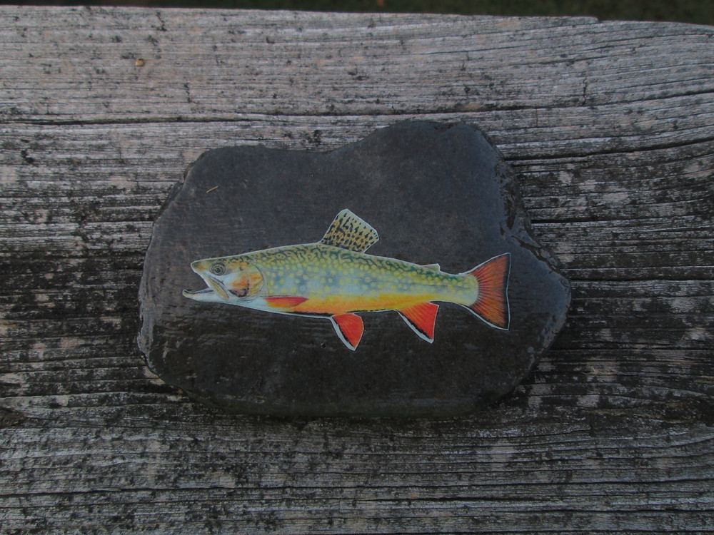 brook trout rock