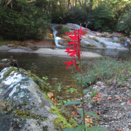 Bullhead Creek - new creek #845