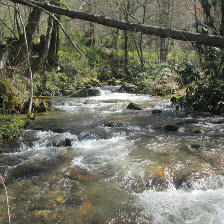 April 5, 2021 New Creek #994!