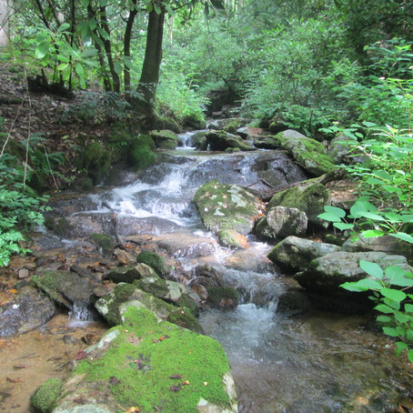2019-06-25 Four new creeks near Brevard