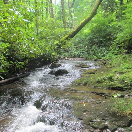 2019-06-19 Long Creek, Robbinsville