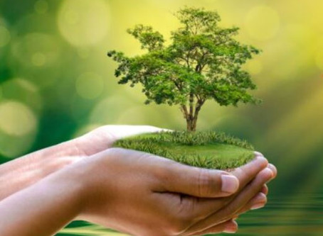 Reflecting on the Spirituality of Laudato Si'