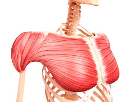 「大胸筋(だいきょうきん)」のセルフ整体