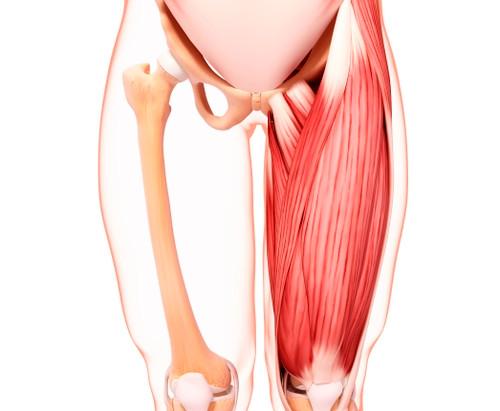 「大腿直筋(だいたいちょっきん)」のセルフ整体