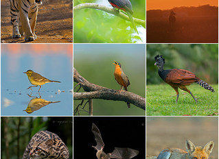 TOP 6 TIPS TO IMPROVE YOUR WILDLIFE PHOTOGRAPHY