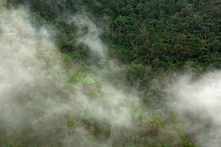 Highland cloud forests