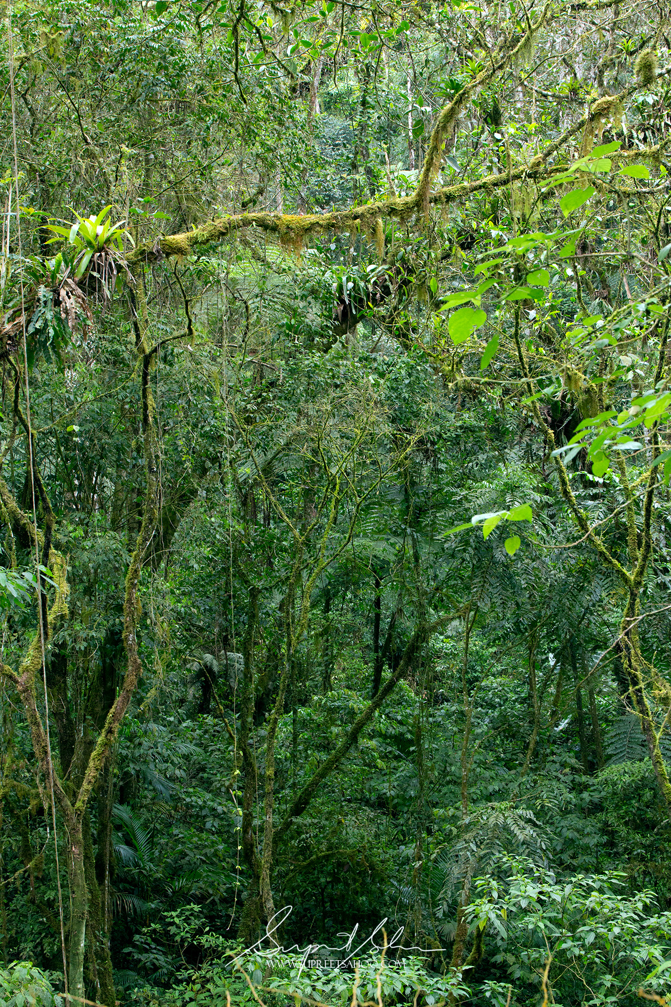 Cloud forest habitat of Northwest Ecuador