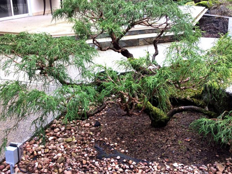 How to use Japanese Landscaping principles : A Guide for Beginners