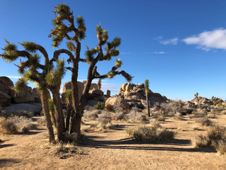 Park #2: Joshua Tree National Park