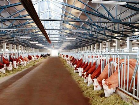 Новый животноводческий комплекс построят в Починках