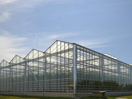 В Нижегородской области построят крупнейший тепличный комбинат и молочный комплекс