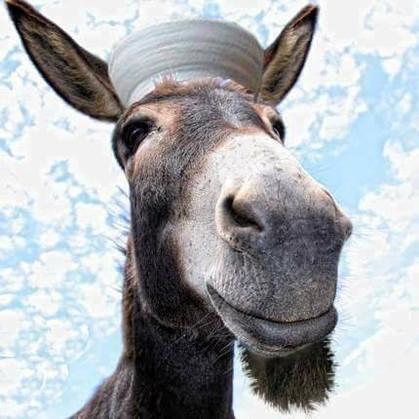 Yafur the tallking donkey