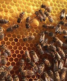 abeilles_rayon2_edited.jpg