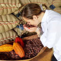 Visite des plantation de cacao