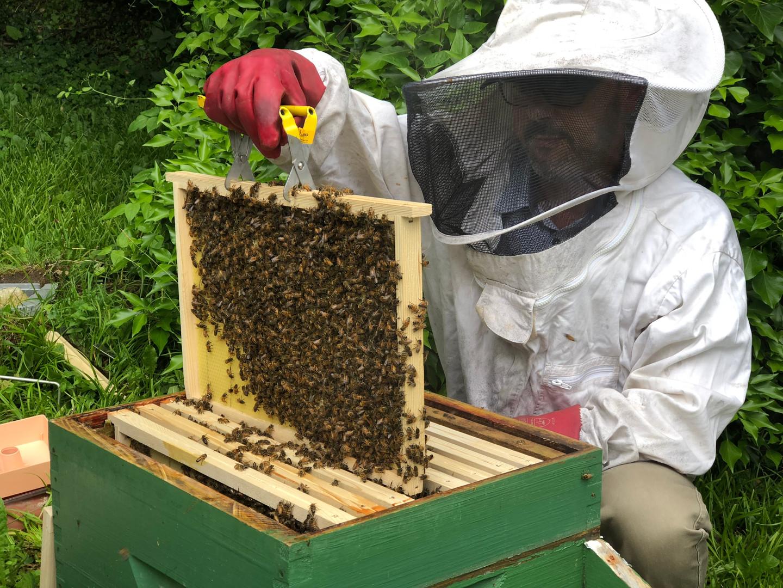 Le miel du Jardin de Pascal revient!