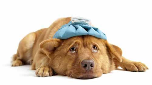colpo di calore cane-cinisellonline