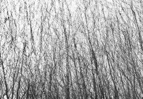 MinimaliaArborea-mostra-fotografica-sesto-san-giovanni-nordmilanonline