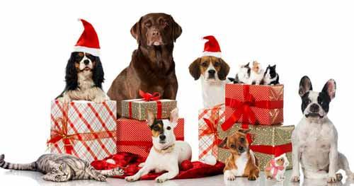 idee regalo natale 2018 animali