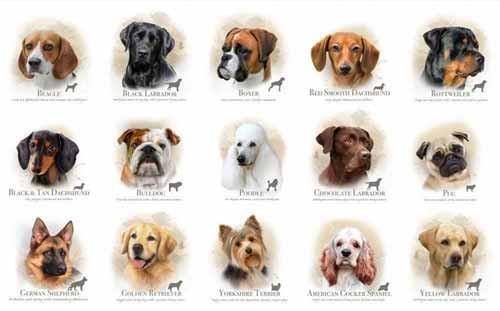 scegliere le razze dei cani