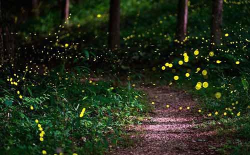 lucciolata-parco-nord-cinisellonline