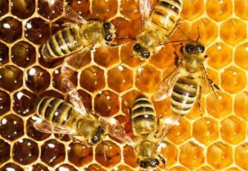 corso-apicoltura-2018-parco-nord-milano-cinisellonline